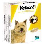 Veloxa Chewable Wormer for Dogs